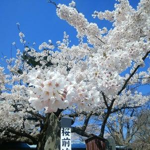 某日記録☆走る+爽快+桜dayの画像