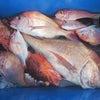 4月28日の釣果の画像