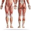 <筋弛緩法>の画像