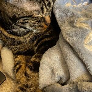 猫と暮らすおうちのリノベ その1の画像