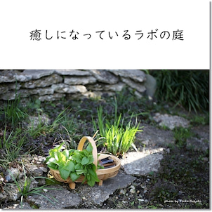 癒しになっているラボの庭の画像