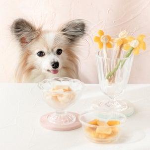 市販のペースト犬おやつで作る、犬のアイス(シャーベット)のレシピ公開中♡の画像