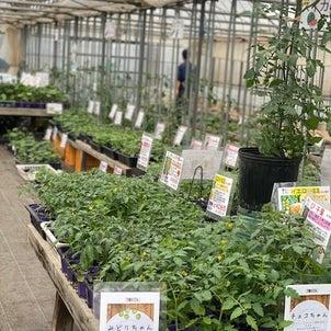 ゴールデンウィークには苗を植えよう!の画像