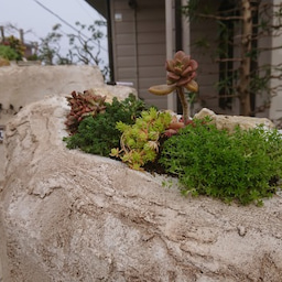 画像 伊豆高原 お庭造り の記事より 6つ目