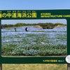 ネモフィラ 海の中道海浜公園の画像