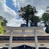 【占い】東国三社代理祈願☆鹿島神宮本宮と不思議な木の画像