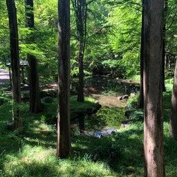 画像 健康と美容にウォーキング 林試の森公園 の記事より 9つ目