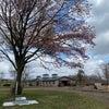 牧場内の桜も少しずつ。ギムレットと鼻セレブ。の画像