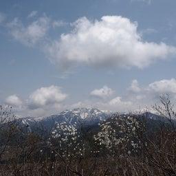 画像 4/30~5/1 新潟① 花盛りの坂戸山 の記事より 10つ目