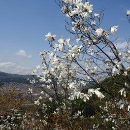 画像 4/30~5/1 新潟① 花盛りの坂戸山 の記事より 19つ目