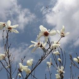 画像 4/30~5/1 新潟① 花盛りの坂戸山 の記事より 11つ目