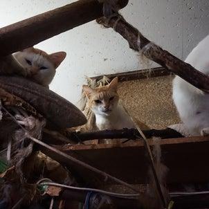 SOS!猫11匹・その10飼い猫までの道のりの画像