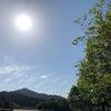 朝の木漏れ日の画像