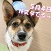 【テレビ出演のお知らせ】Nスタふくしまの画像