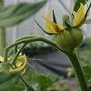 高橋ファームの野菜の画像