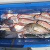 5月3日の釣果の画像