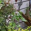 ぶる庭、春の花まつり!