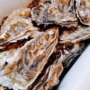 「北海道厚岸産 マルえもん」旨味たっぷりのブランド牡蠣(`・ω・´)の画像