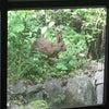 野ウサギ出現!とある昼下がりの出来事。の画像