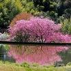 ★必見★花桃の世界その6 .。oO