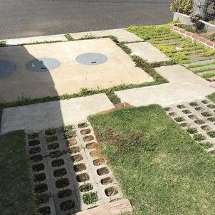 駐車場~玉竜の草むしり~の画像