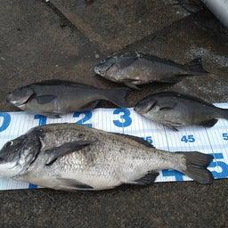 画像 4月28日(水)の釣果 の記事より