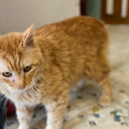 画像 2代目看板猫《エンペラー》家猫修行へ⁉️ の記事より 1つ目