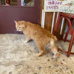 画像 2代目看板猫《エンペラー》家猫修行へ⁉️ の記事より 3つ目