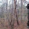山荘:今日は雨、ご近所さんがみえました・・♪