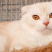 ビビアンの他猫共存修行ミッション