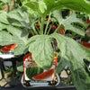 野菜苗の画像
