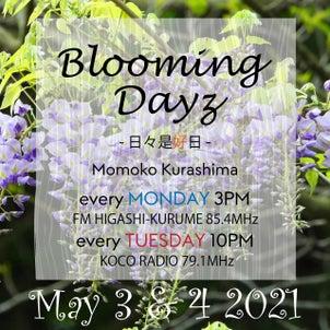 【放送後記】Blooming Days -日々是好日-|2021.5.3|倉嶋桃子の画像
