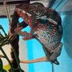 5月9日限定爬虫類セール