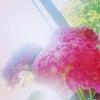 ZEN呼吸法集中対面レッスン応援プラン@京都(オンライン併用可)スタートの画像