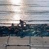 時間軸はないということを肌で感じた海への旅の画像