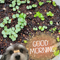 小さなあみぐるみ☆豆ぐるみの部屋☆MIX犬あずきの毎日