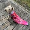 ⌘   シェナちゃん   ⌘  鯉のぼりに変身 〜 ピンパプーさんのお洋服 〜の画像
