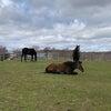 のんびりポカポカ陽気。放牧地の肥料巻きの画像