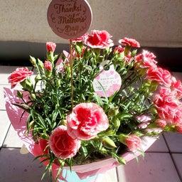 画像 花より団子なプレゼント、ありがたや♪ の記事より 3つ目