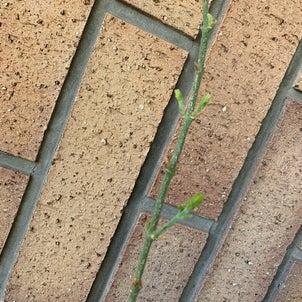 植物の力ってスゴイの画像