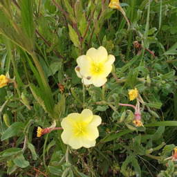 画像 5/7 K144 本日からは黄色い種の13日がスタートしました.+:。 の記事より 3つ目