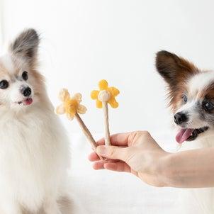 市販の犬おやつ2種類でOK!簡単犬のアイスキャンディレシピ公開中の画像