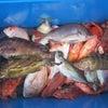 5月7日の釣果の画像