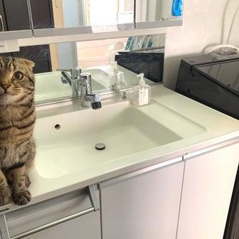 お洗濯での、洗えたかどうか?の確認方法。