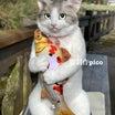 猫制作picoの写真を使った詐欺について