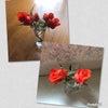薔薇の花 選曲タイムの画像
