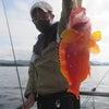 5月8日の釣果の画像