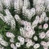花を愛で、音楽を愛し@GWの画像