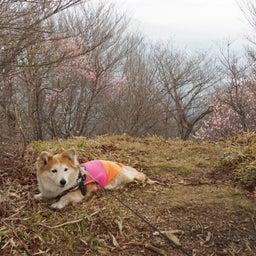 画像 5/8 夕日岳まで、歩いてきたよ~ の記事より 4つ目