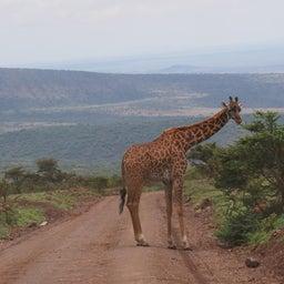 画像 アフリカ、タンザニアの旅【ステイホームでも旅気分】 の記事より 1つ目